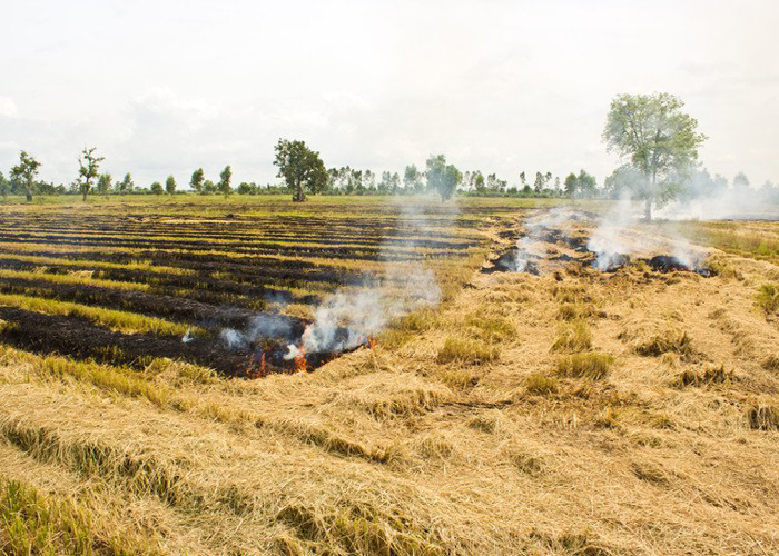 The left-over land and crop residues being burnt
