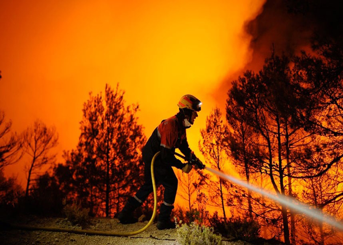 A fire-fighter struggling to extinguish a forest fire.