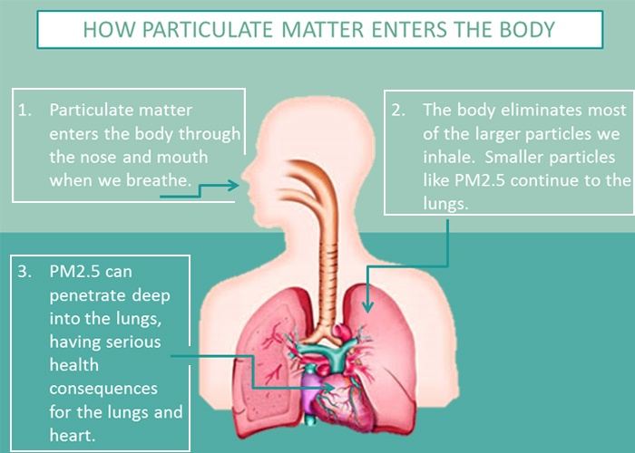 How particulate matter enters the body